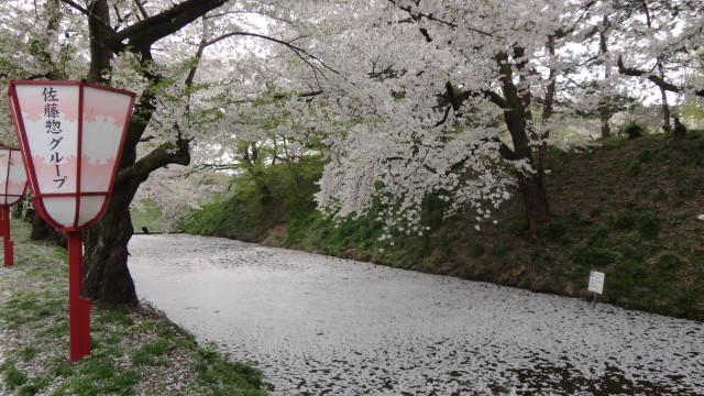 Amori Sakura