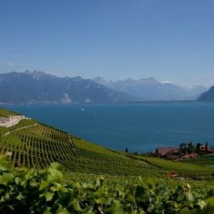 Lavaux vineyards.
