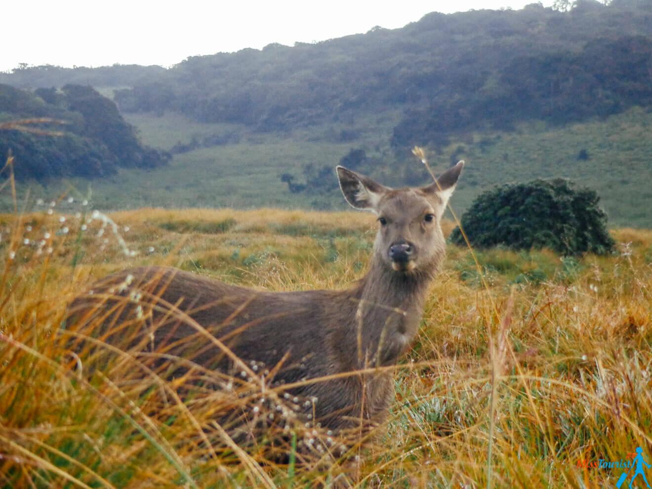 animals Horton Plains Sri lanka