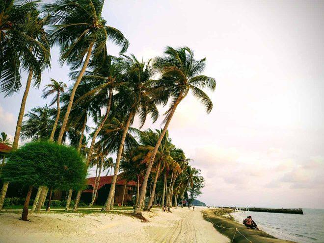 trees in langkawi
