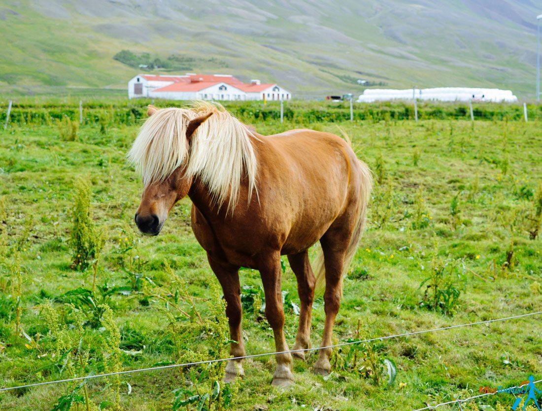 10 Western Fjords Iceland