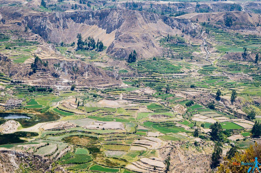 Canyon de Colca Peru