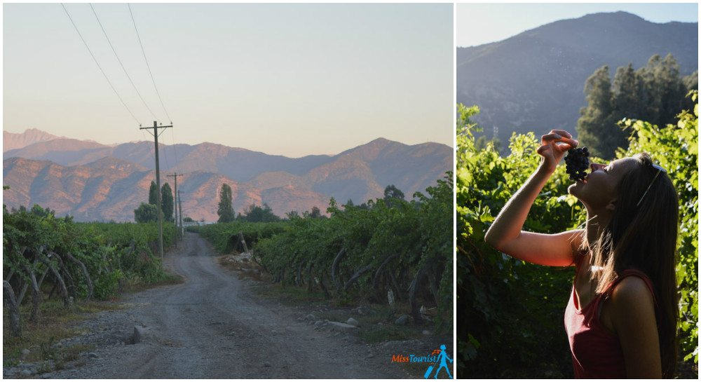 top Chilean wineries Casa Silva2
