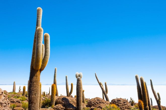 8 Things You Need To Know Before Your Bolivia Salt Flats Tour in Uyuni cactus