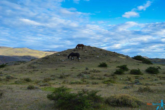 Puerto natales Torres del Paine