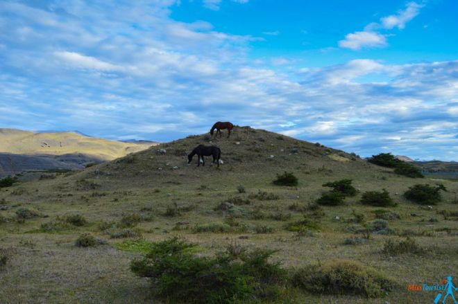 Puerto natales Torres del Paine torres del paine chile