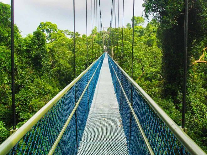13 Best Things To Do In Singapore MacRitchie Treetop Walk
