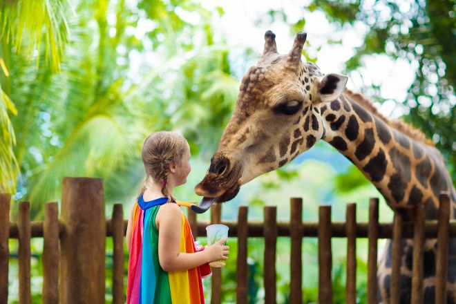 13 Best Things To Do In Singapore Singapore Zoo 1