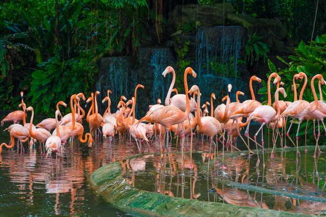 13 Best Things To Do In Singapore Singapore Zoo Flamingo