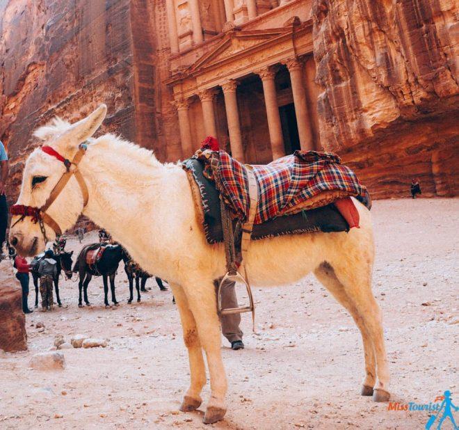 donkey ride petra jordan