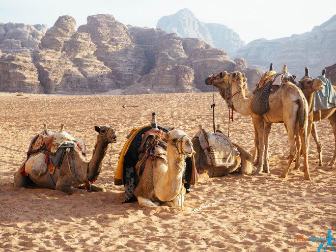 10 currency in Jordan