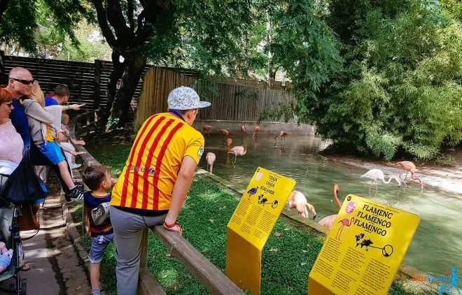 19 barcelona Zoo with kids (1)