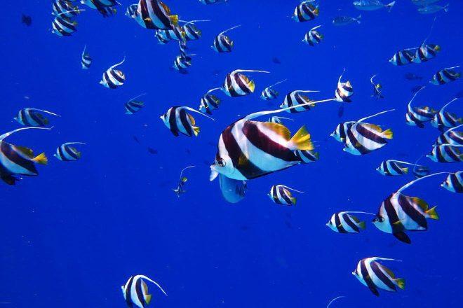 3 Amazing Resorts In The Maldives Bandos diving 1