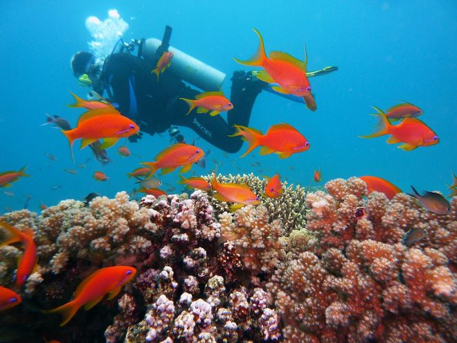 3 Amazing Resorts In The Maldives bandos diving 6