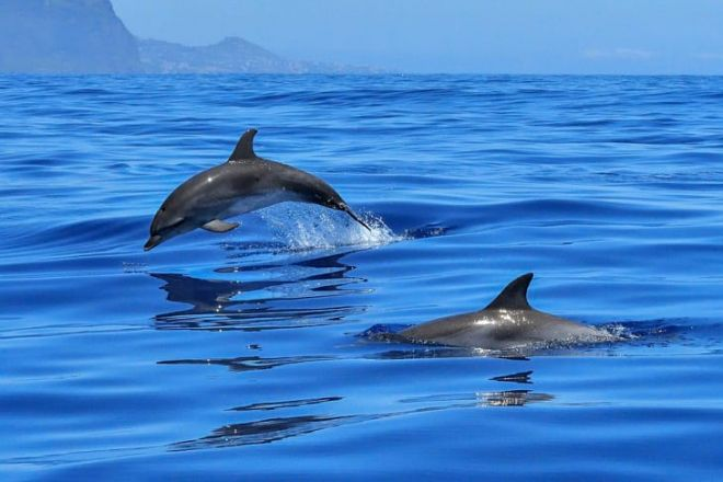 7 excursions you have to take in the Maldives dolphins