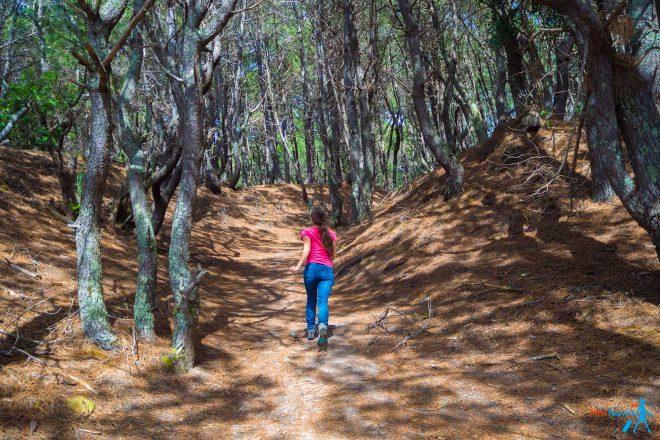 15 Things To Do in Coromandel Peninsula 32