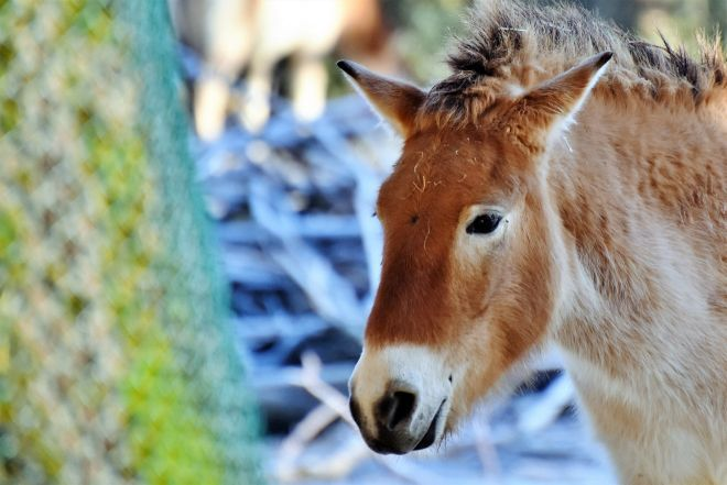 15 Things To Do in Coromandel Peninsula donkey
