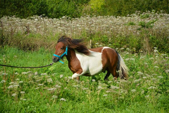15 Things To Do in Coromandel Peninsula pony