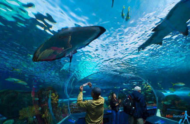 2 Weeks Canada Road Trip Itinerary – Exploring Quebec And Ontario toronto aquarium