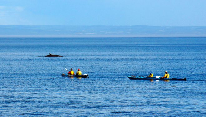 2 Weeks Canada Road Trip Itinerary – Exploring Quebec And Ontario whale watching kayak tadoussac