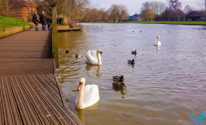 11 Best Things to do in Stratfod-Upon-Avon swans