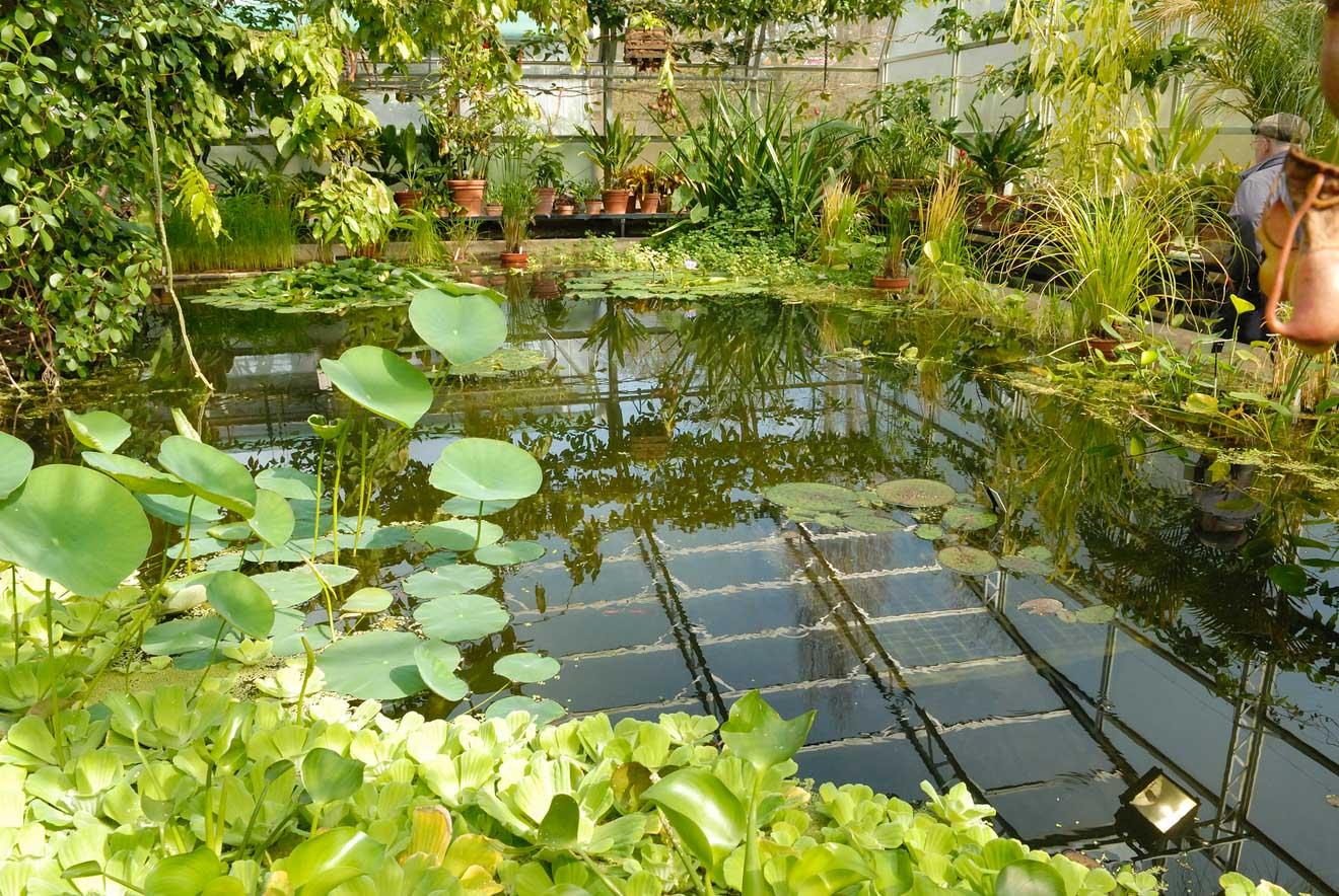 11 Things to do in Oxford botanic garden2