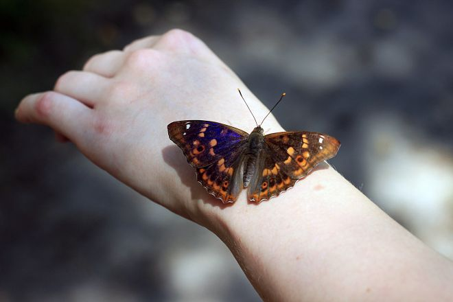 11 Best Things to do in Stratfod-Upon-Avon butterfly farm 2