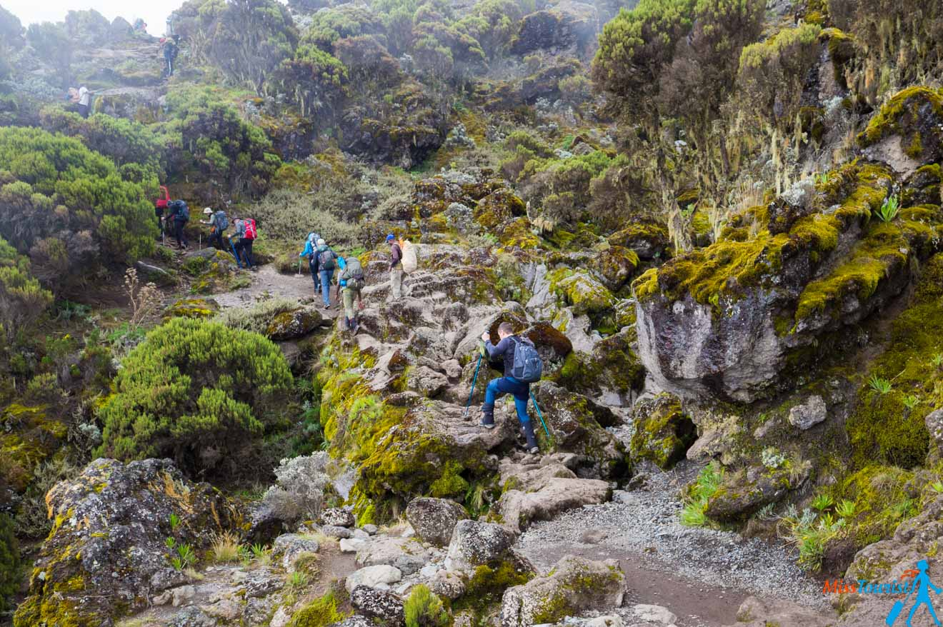 Climbing Kilimanjaro – 7 Things You Should Know Before You Go 17