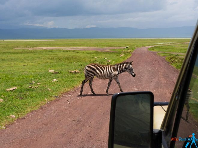 How To Plan A Perfect Safari In Tanzania – 7 Things You Need To Know 13