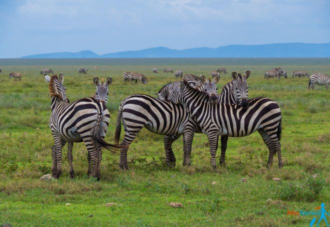 How To Plan A Perfect Safari In Tanzania – 7 Things You Need To Know 15