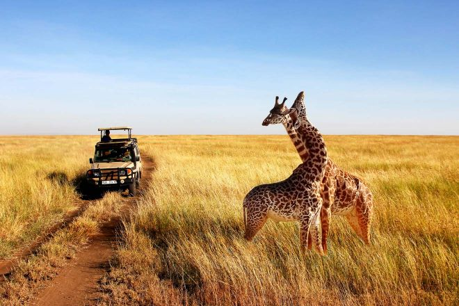 How To Plan A Perfect Safari In Tanzania – 7 Things You Need To Know 26