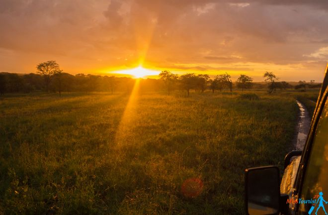 How To Plan A Perfect Safari In Tanzania – 7 Things You Need To Know 34