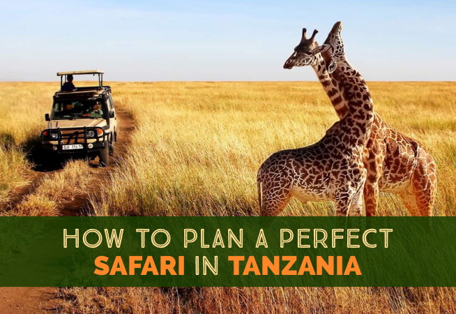 How To Plan A Perfect Safari In Tanzania – 7 Things You Need To Know cover