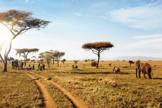 How To Plan A Perfect Safari In Tanzania – 7 Things You Need To Know elephants