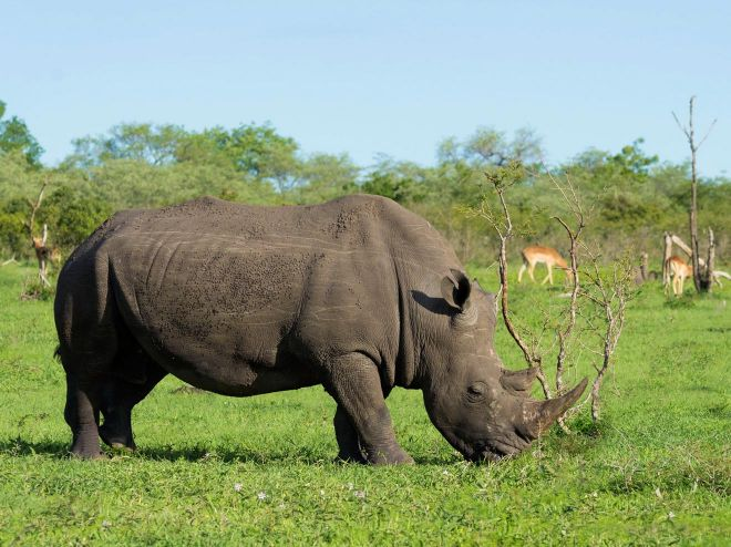 How To Plan A Perfect Safari In Tanzania – 7 Things You Need To Know rhino