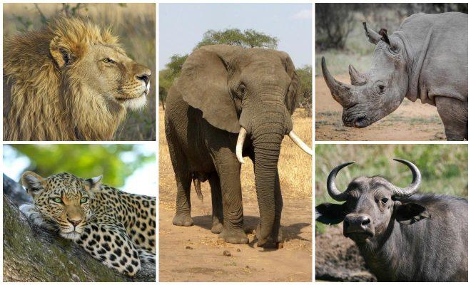 How To Plan A Perfect Safari In Tanzania – 7 Things You Need To Know the big 5 safari