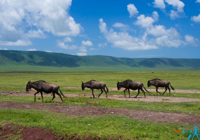 How To Plan A Perfect Safari In Tanzania – 7 Things You Need To Know 14
