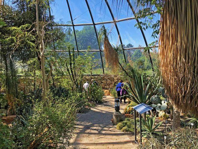 visit zurich botanical garden exotic plants