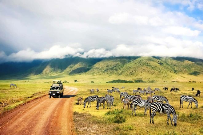 zebras national park