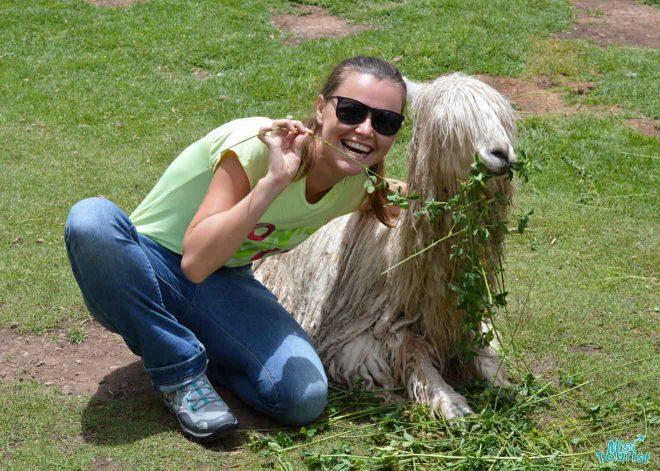 woman next to llama