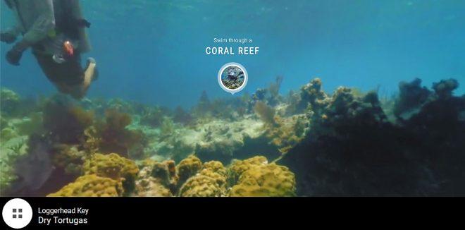 coral reef online