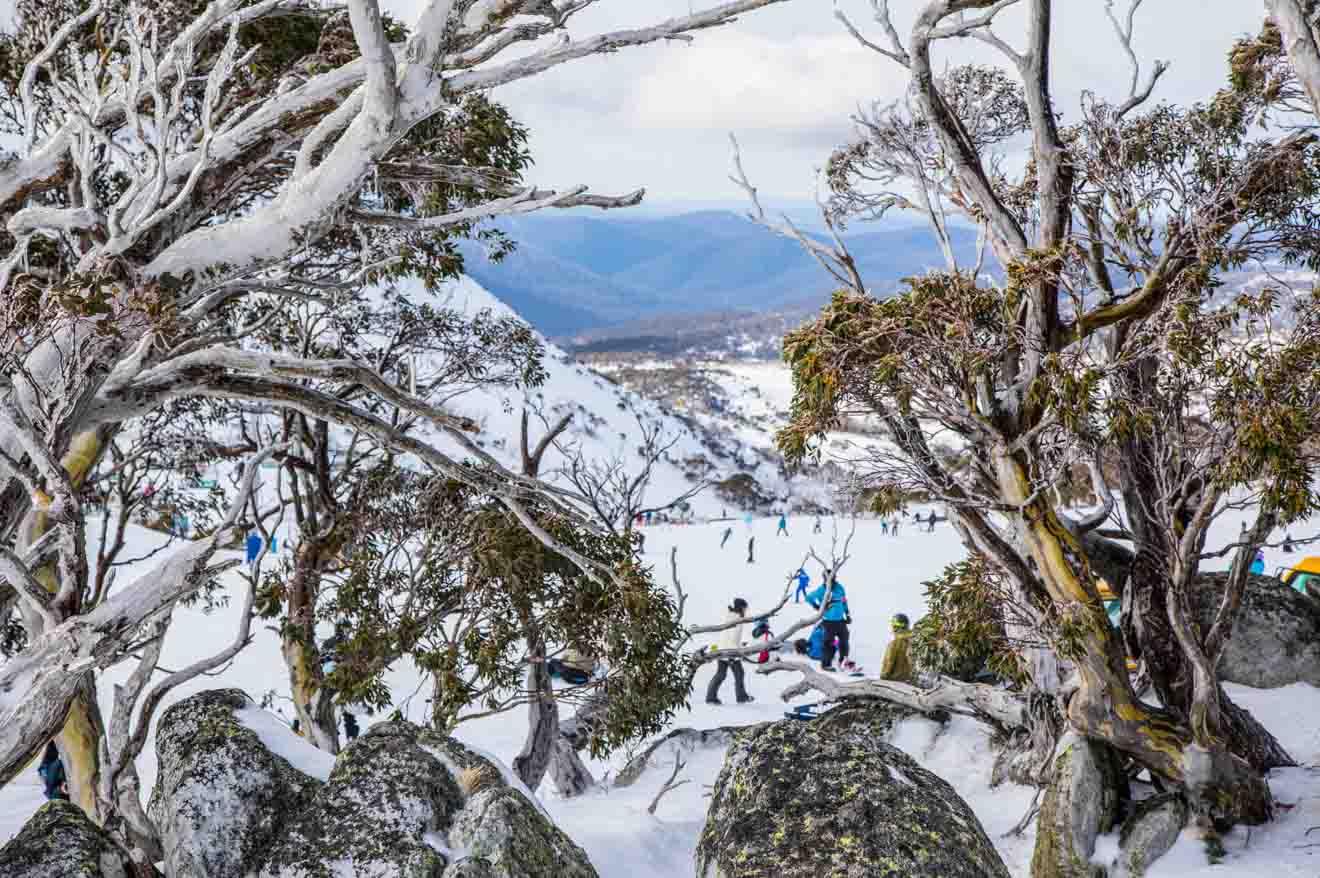 Blue Cow ski resort, Perisher snow