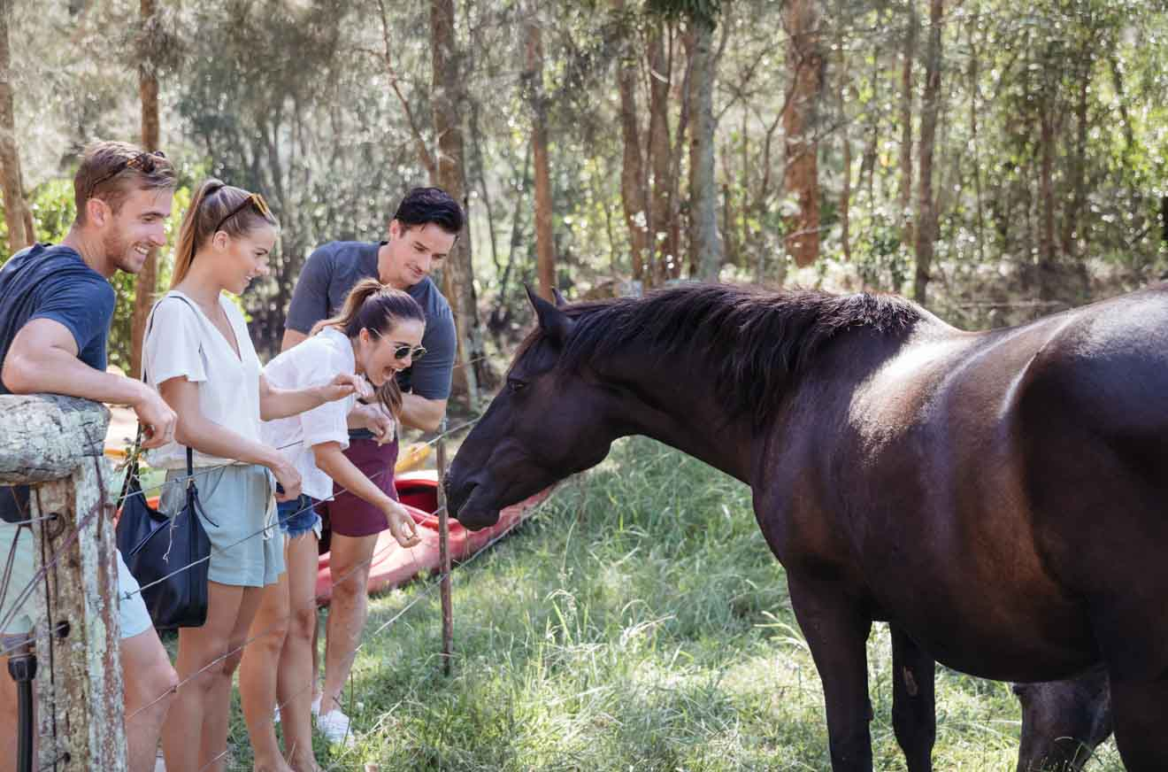 Central Coast Glenworth Valley Horse riding