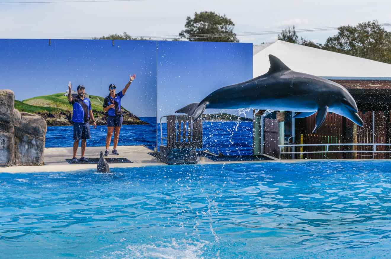 Dolphin Marine Conservation Park, Coffs Harbour Dolphin Show