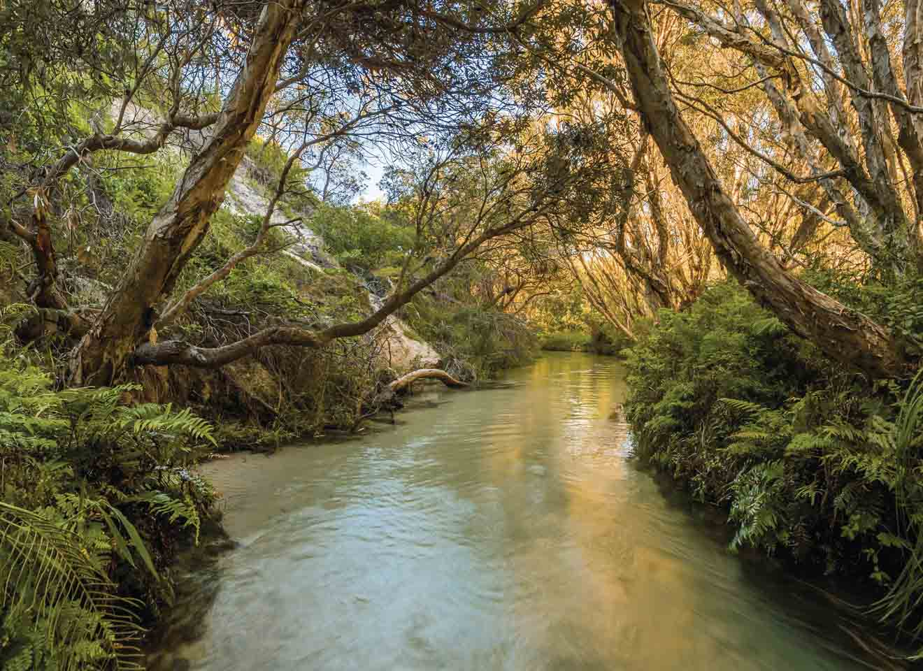 eli creek things to do in fraser island