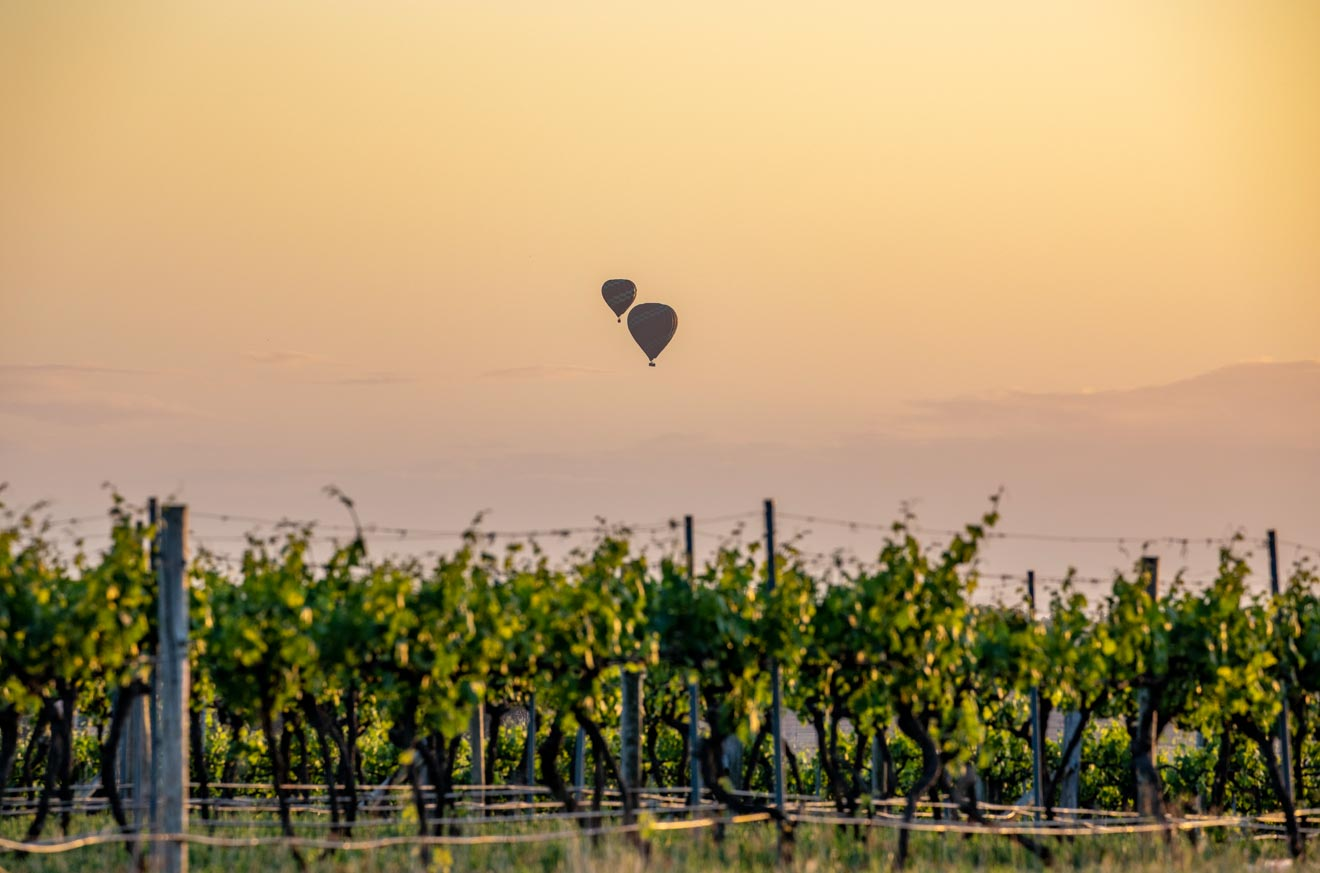 Hot air balloons flying over the Hunter Valley winery