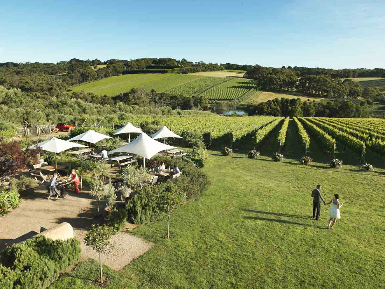 date ideas - Montalto Vineyard and Olive Grove Things to do in Mornington Peninsula