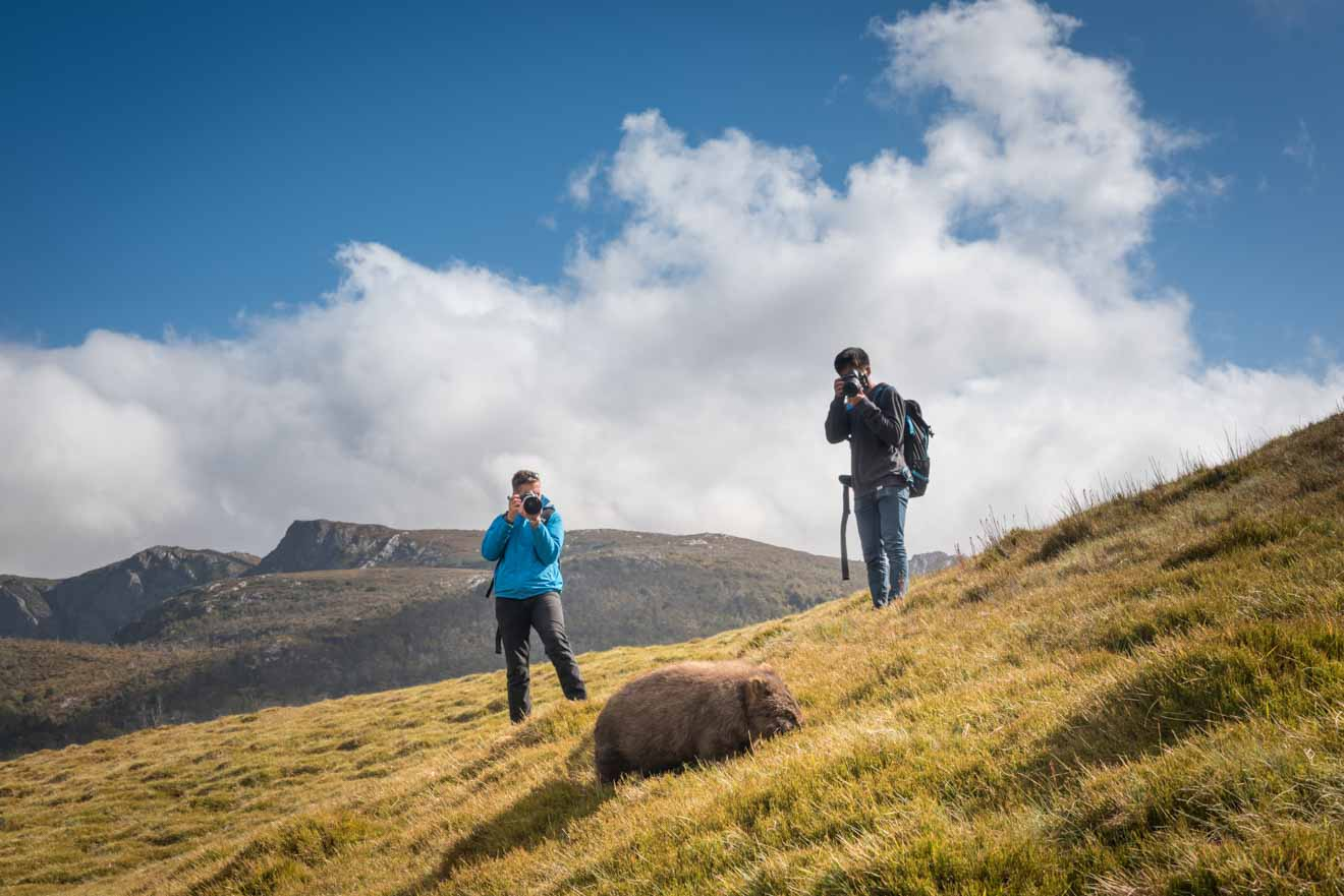Photographing a wombat Overland track for blog