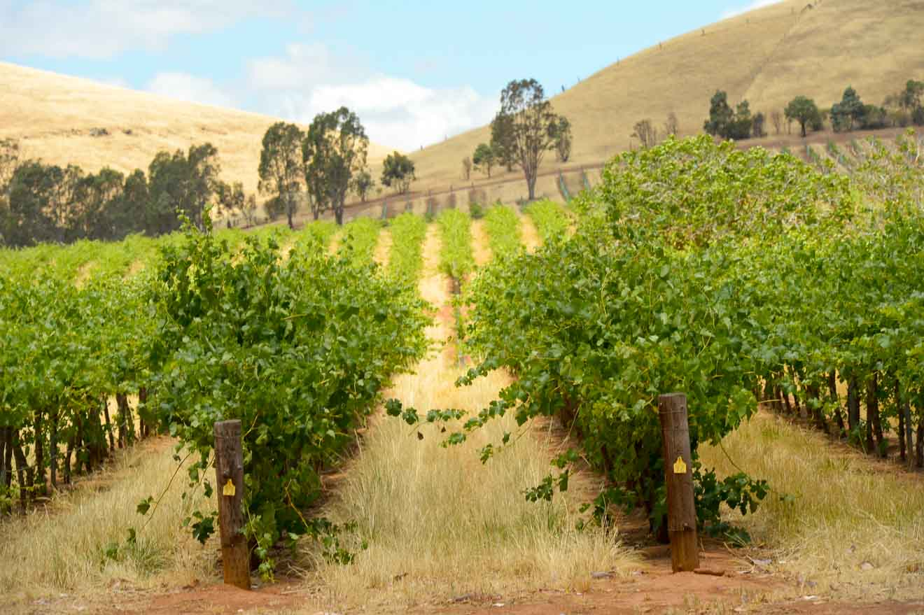 barossa valley tours - Adelaide Things to do in Barossa Valley Wineries