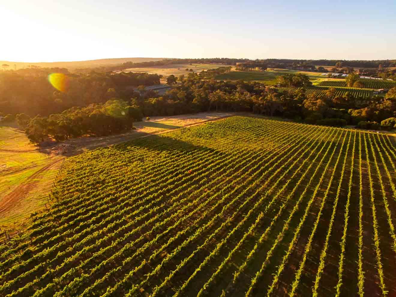 vasse felix, Amato Vino Margaret River Wineries